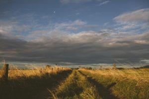 Windy Grassy Field